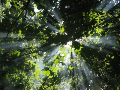 森林,性质,光线
