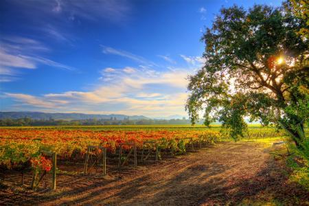 景观,秋季,天空,希尔兹堡葡萄酒之旅,灌木,性质