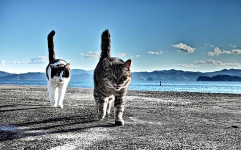 海滩,沙滩,卡尔卡,猫,尾巴,山,土地,地平线,天空,云层