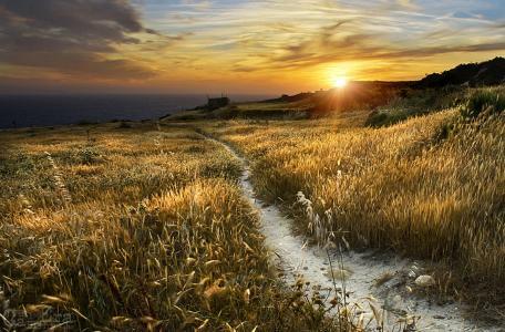金色的夕阳,芦苇,路径,丘陵,海,天空,马耳他,照片,朱利叶斯瓦西列夫
