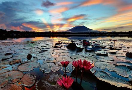 菲律宾,美丽,莲花,山,河,超级照片