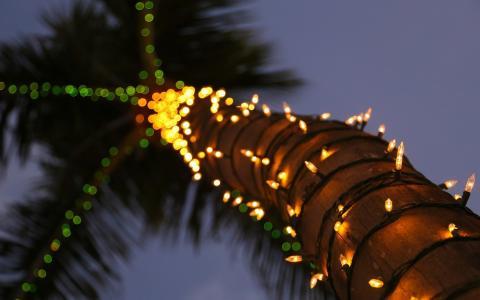 棕榈树,灯,宏观照片