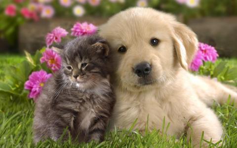 狗,猫,世界