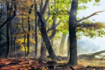 森林,古树,果岭,大麻,烟霾,光线,拉斯范德戈尔