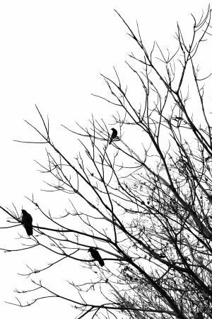枝头上的乌鸦