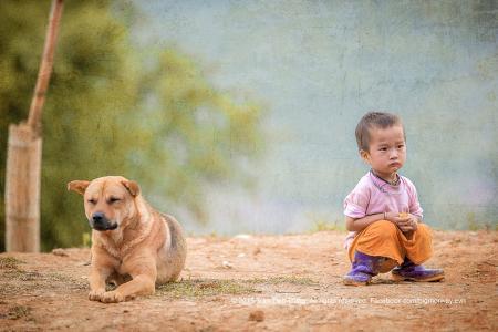男孩,亚洲人,坐,看,狗