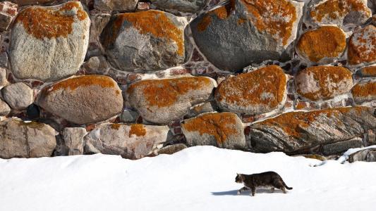 猫,冬天,石头,雪