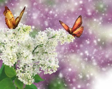 丁香,蝴蝶,photoshop,大自然,幻想