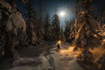 一个在森林里,吃,雪,灯笼,月亮,夜晚,照片,vitalin vitalini