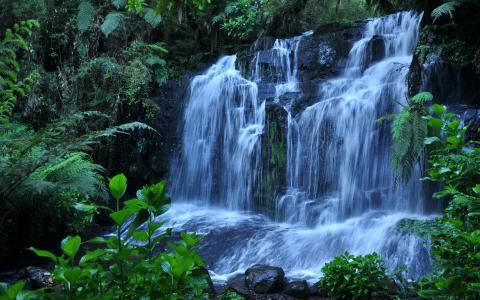 瀑布,石头,植物,水