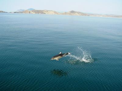 海豚,飞行,海,丘陵