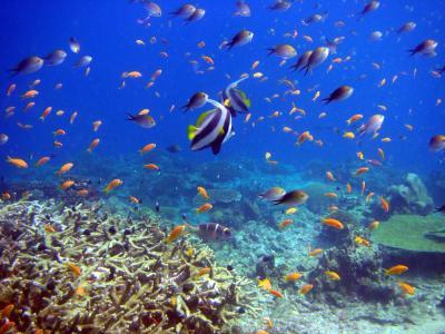 鱼,海底世界,珊瑚礁和鱼,珊瑚