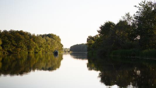 夏天,河,光滑,船,树