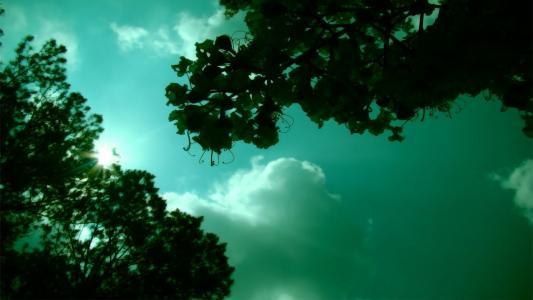 树上,绿叶,天空
