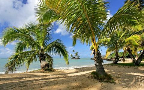 性质,热带地区,天堂,海洋,棕榈树,海滩