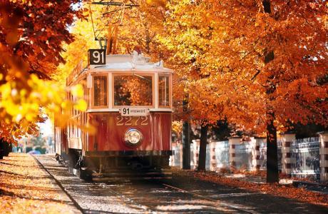 布拉格秋天,老电车,树木,黄褐色的树叶