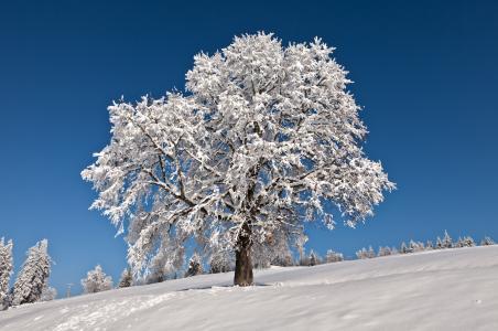 冬天,树,树木,景观