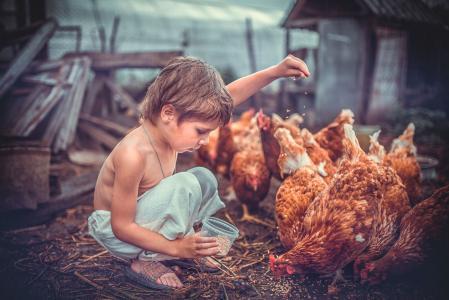 谷仓,鸡,男孩,饲料
