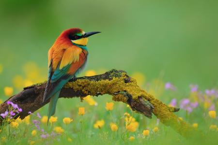 金色的树枝,树枝,鸟,鲜花,养蜂人