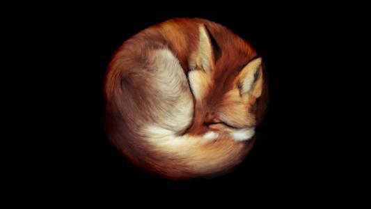 背景,狐狸
