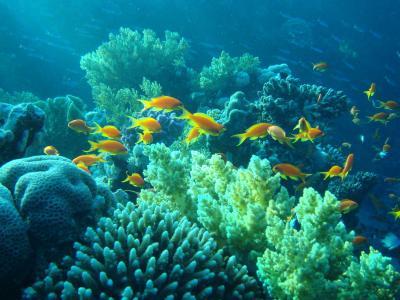埃及,珊瑚,水下,鱼,海底世界