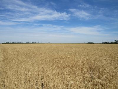 乌克兰,字段,天空,小麦,国旗