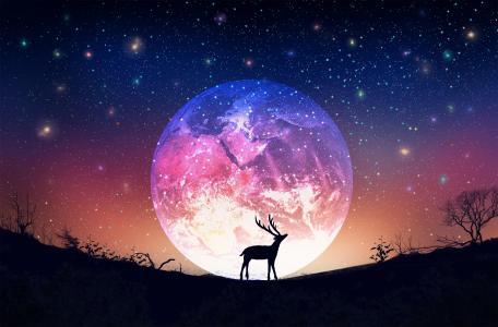 治愈系唯美星空森林与鹿插画