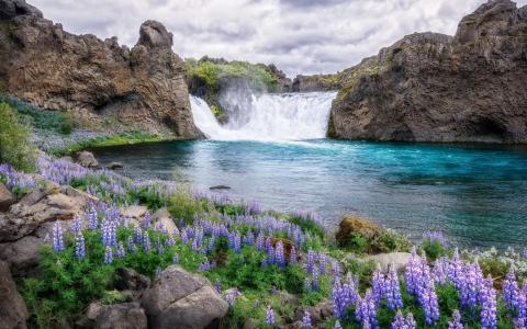 瀑布,湖,岩石,羽扇豆