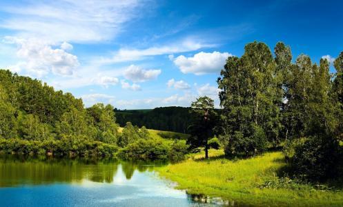 自然,夏天,池塘,小山,森林,桦木,美丽