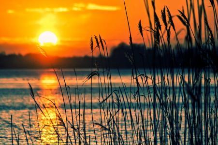 芦苇岸边的夕阳