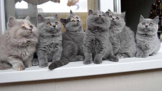 小猫,孩子,构成,班,看,英国,英国