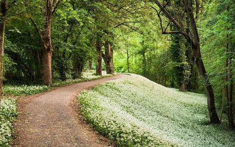 草,树,路径,绿色,森林