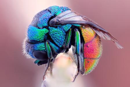 蜜蜂,冻结,飞,宏,湿,彩虹
