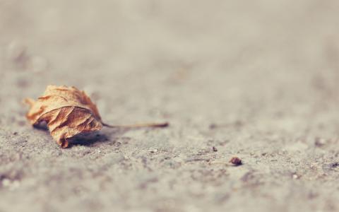 地球,干,叶,表面
