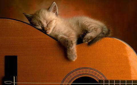 小猫,毛茸茸的,吉他