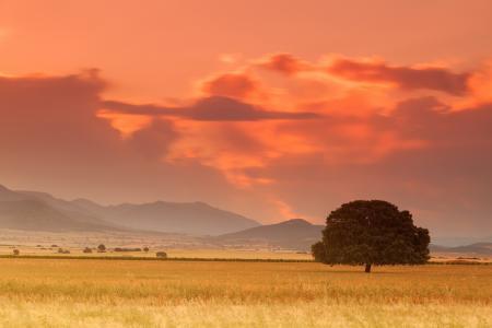 萨凡纳,字段,草原,山,树,日落,黎明,自然,夏天,美女