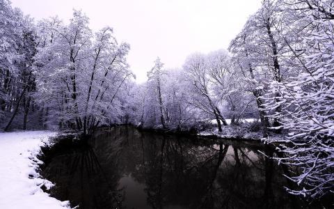 公园,性质,冬天,美丽,河,钓鱼