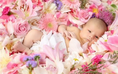 宝贝,宝贝,鲜花