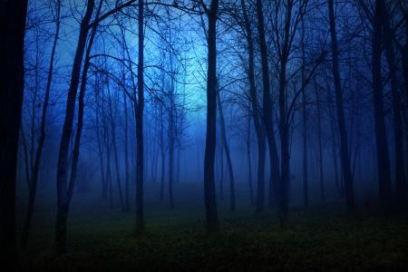 树木,酷,雾,黑暗