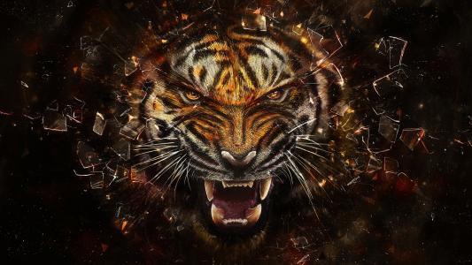 老虎,碎片,玻璃