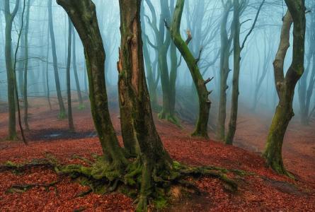 薄雾,邀请,神秘的森林,拉斯范德戈尔