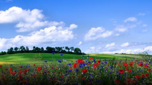 油漆,鲜花,夏天