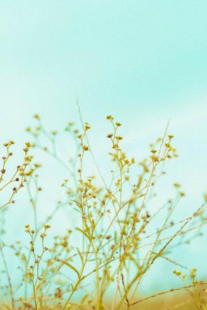 小清新护眼植物