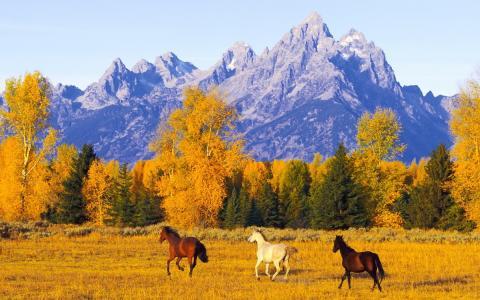 自由,开阔的空间,秋天,山,马