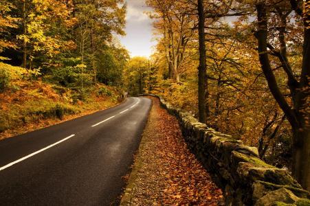 自然,秋天,道路,标记