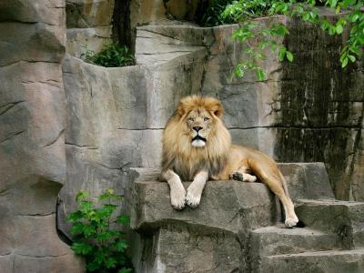狮子,石头,猫