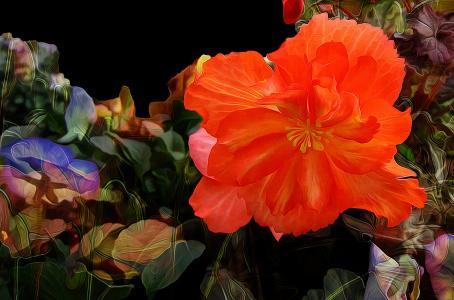 花,花瓣,性质,线