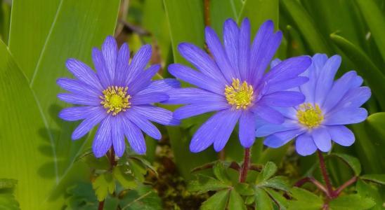 鲜花,宏观,春天