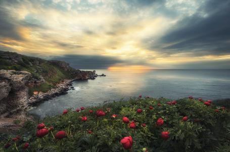 Krasi Matarov,保加利亚,自然,风景,海,岩石,花,牡丹,黎明