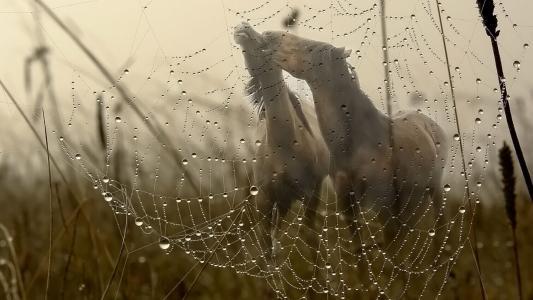 马,恋人,蜘蛛网